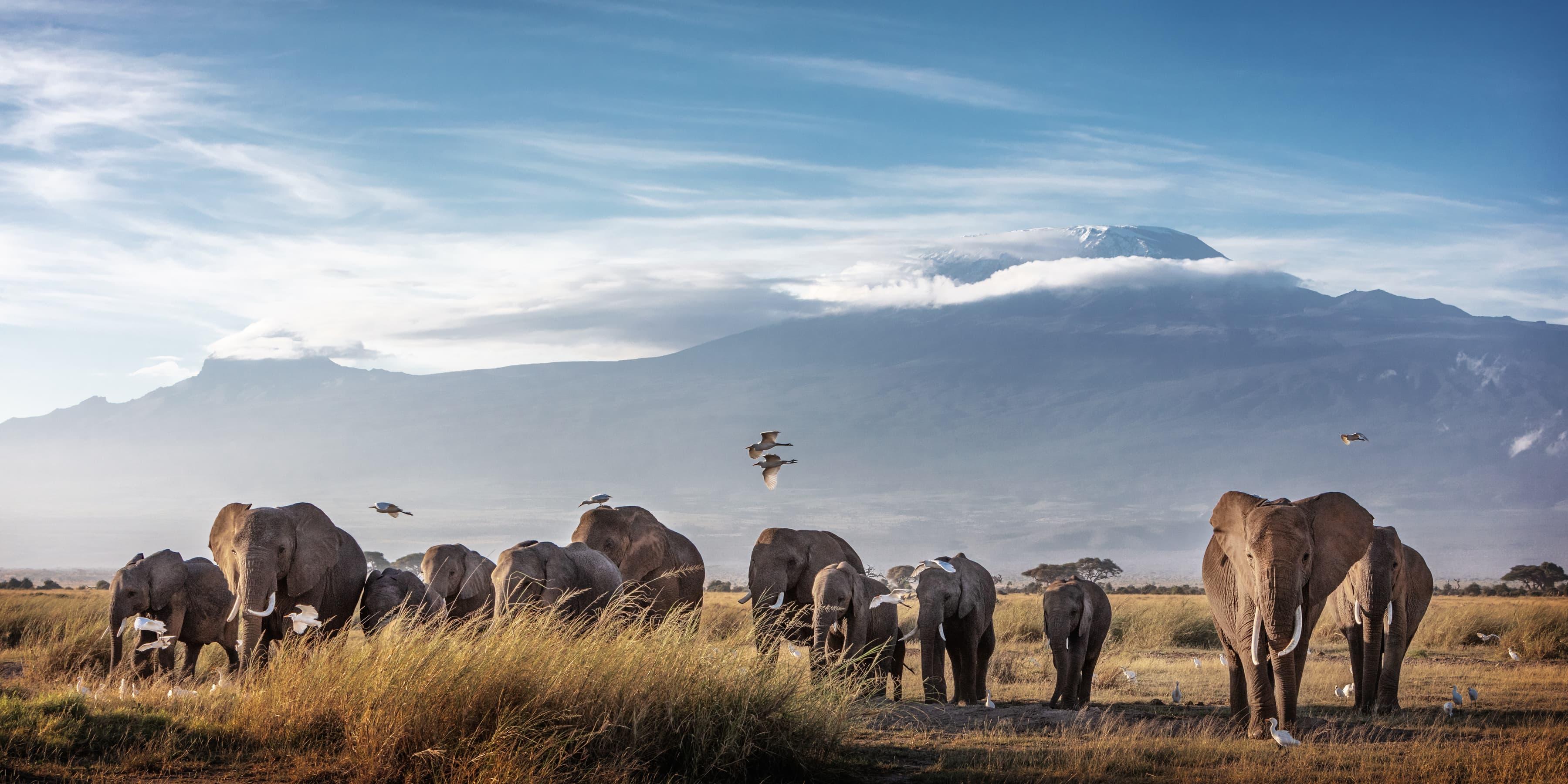 ll_safari_day_trip