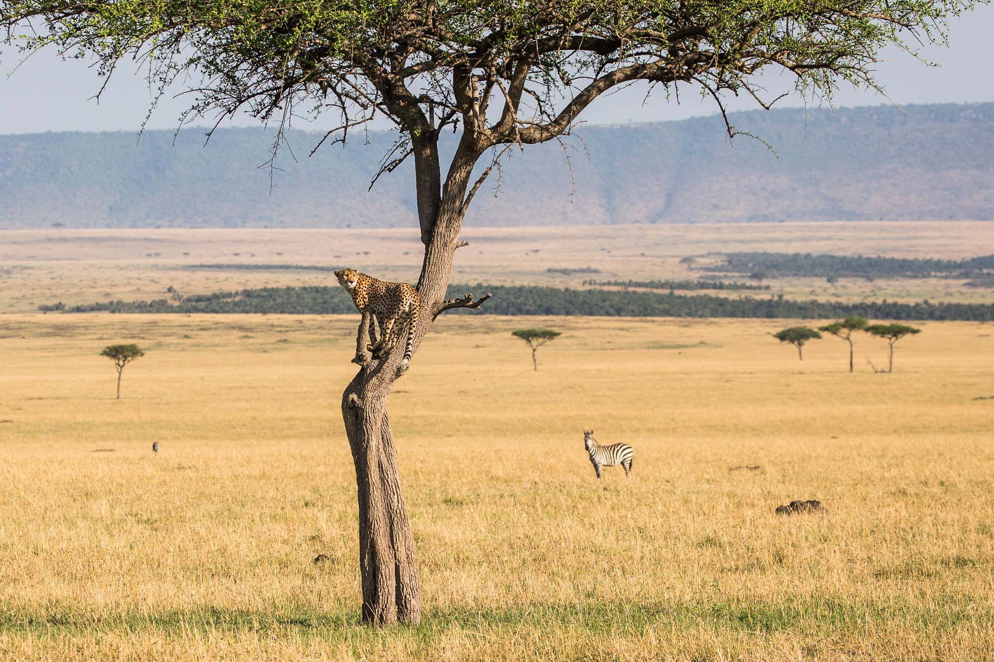 Legendary Expeditions - Tanzania