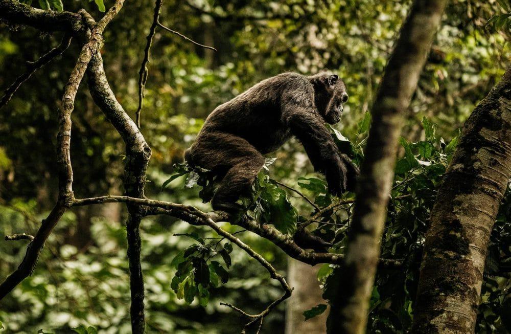 oonh-activities-chimpanzee-trek-2