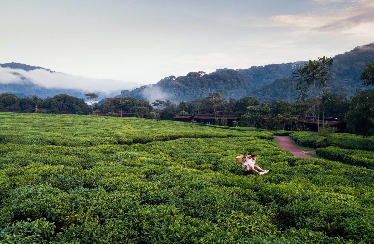 oonh-lifestyle-drone-tea-picking-1
