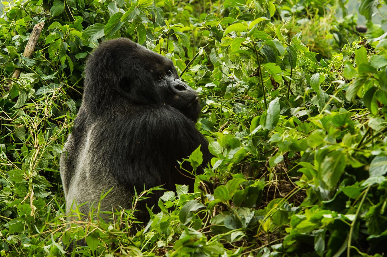 Rwanda Gorilla Experience Safari