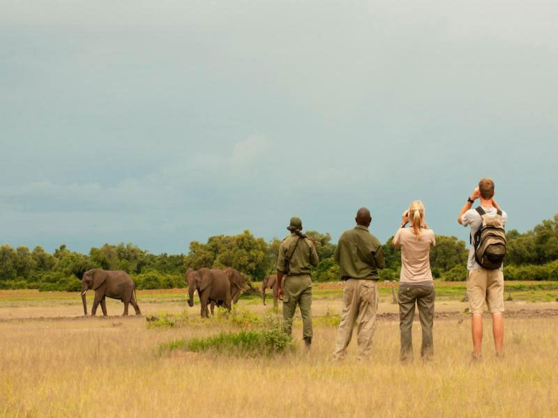 Zambia: Experience a once-in-a-lifetime walking tour in the Luangwa Valley