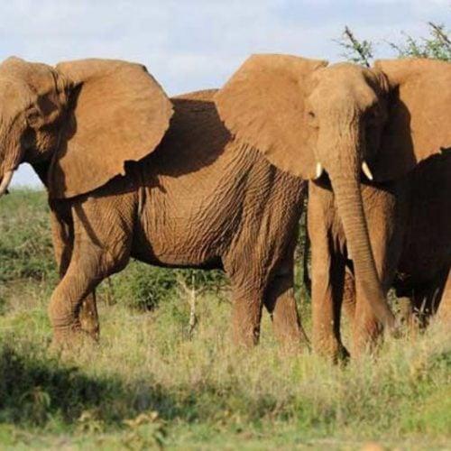 3-days-walking-safaris-kenya-4