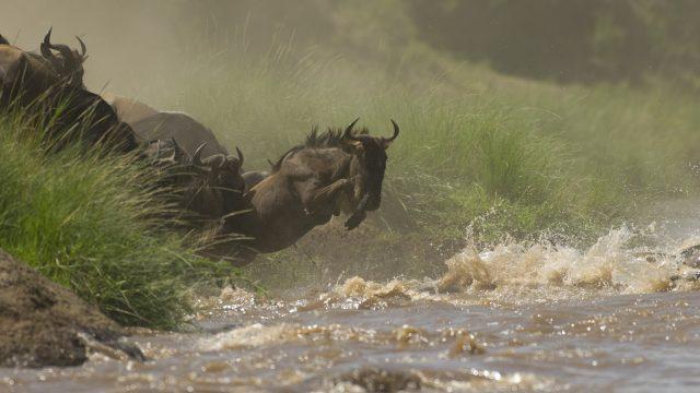 Kenya & Rwanda Safari