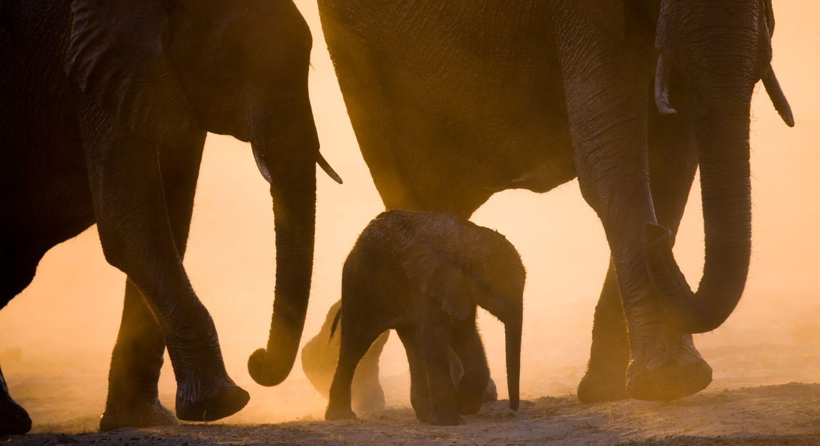 Zimbabwe & Botswana Riding Safari