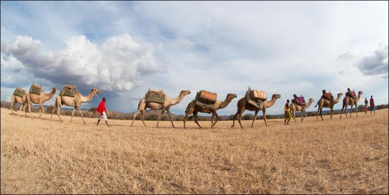 camelsinline