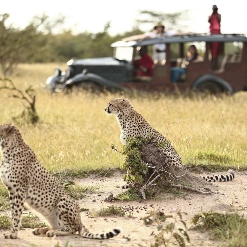 cottars_-_game_drive_5