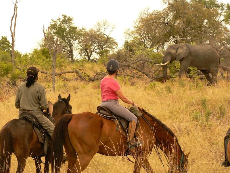 elephant__riders