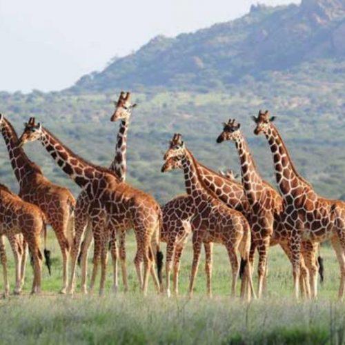 walking-safaris-holidays-kenya