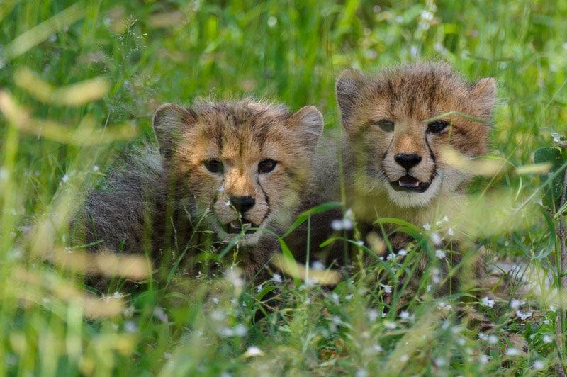 south africa animal safari
