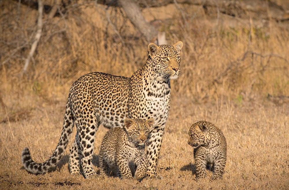 south africa safari adventure