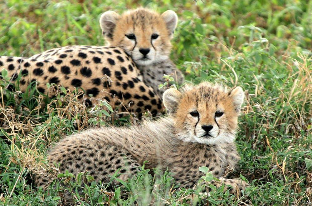tanzania african safari