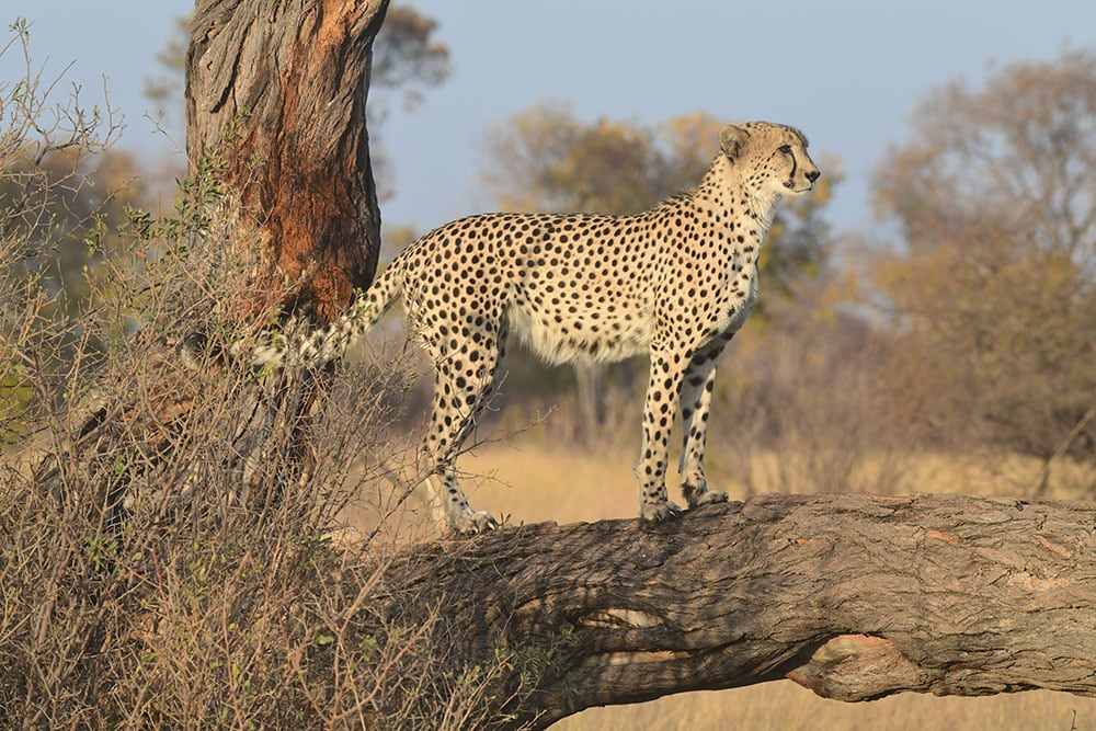 zimbabwe adventure safari